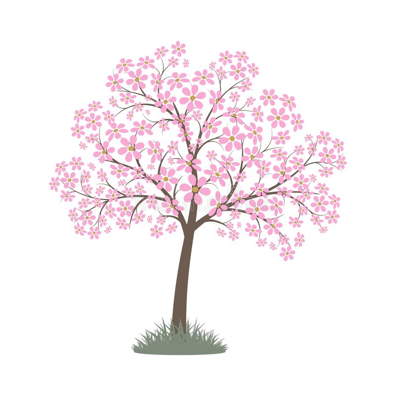 Blooming pink flowers spring tree. Vector image royalty free illustration
