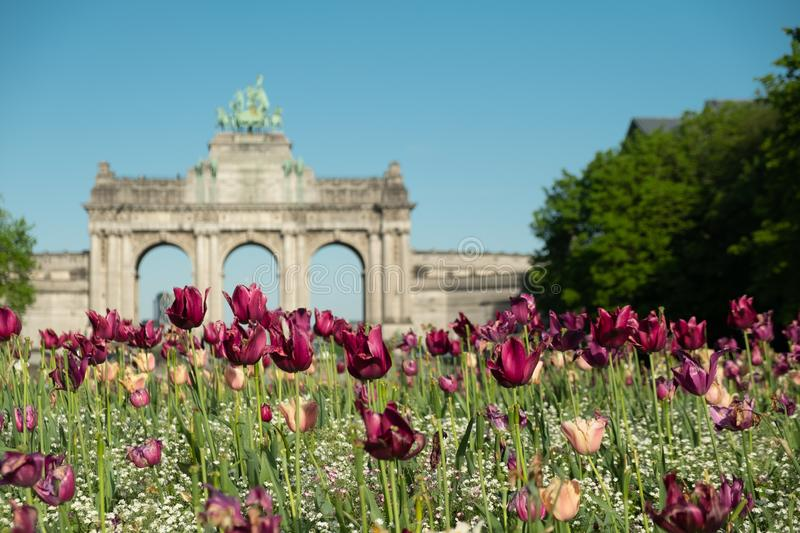 Blooming pretty tulips at Jubilee Park in Brussels. Triumphal Arch on the background royalty free stock photography