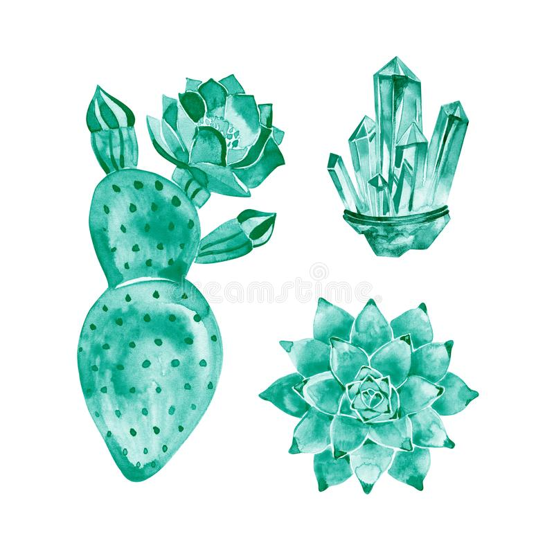Blooming prickly pear cactus isolated on white background. Watercolor hand drawn illustration of heart shaped cactus. Blooming prickly pear cactus isolated on stock illustration