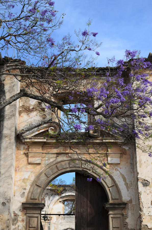 Blooming with purple flowers tree and an medieval arch stock image