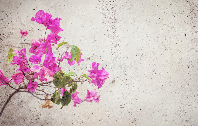 Blooming red flower blended into concrete wall. Background with copy space on the right stock images