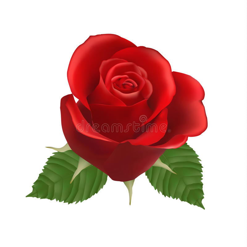 Blooming red Rose. Vector. Eps 10 vector illustration