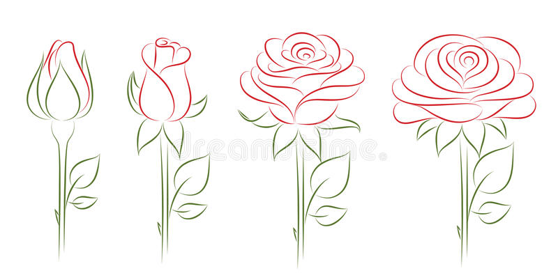 Download Blooming roses. stock vector. Image of single, valentine - 20032591