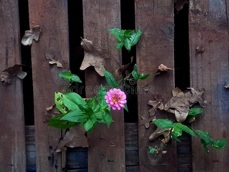 Blooming through the rubble royalty free stock images