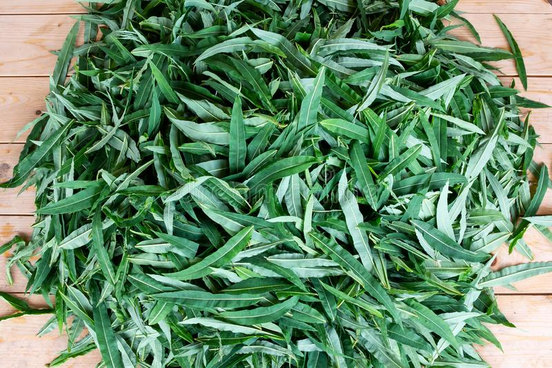 Blooming sally leaves - raw materials for making traditional Russian Koporsky tea also known as Ivan Tea stock photo