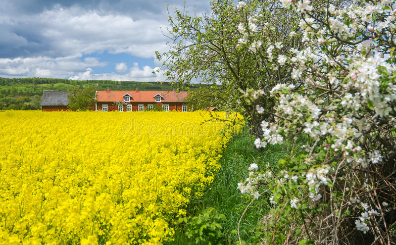 Blooming season in Sweden royalty free stock photos