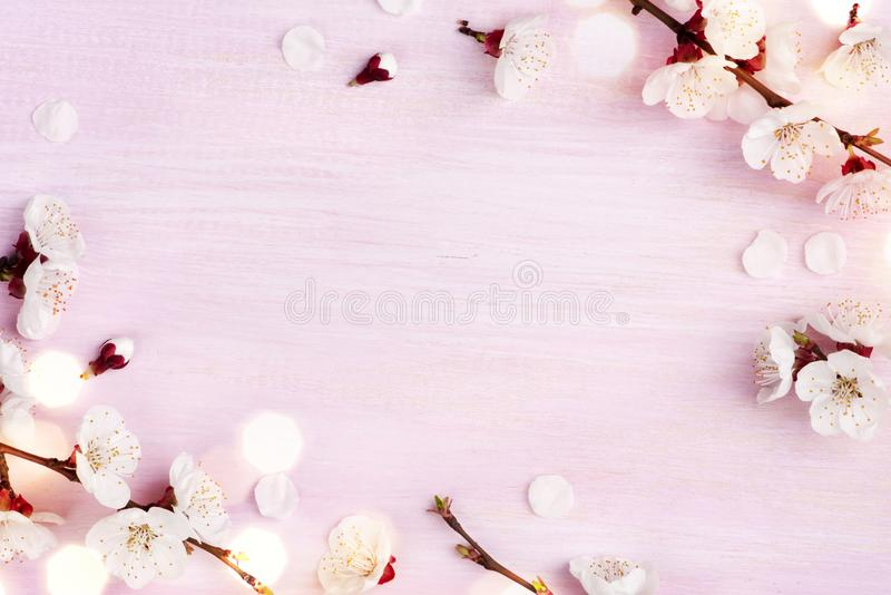 Blooming spring flowers on pink wooden background with copy space.  stock photos
