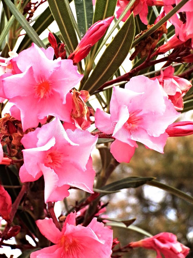 Blooming spring flowers royalty free stock photography