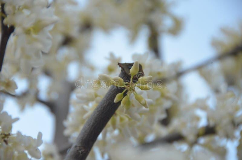 Blooming spring stock photos