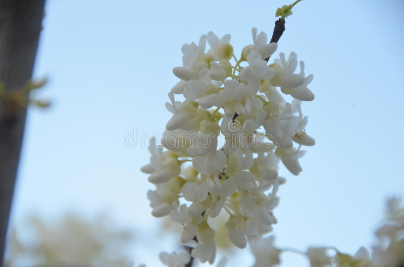 Blooming spring stock images
