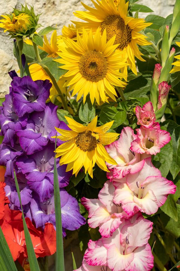 Blooming sunflowers and colorful gladioli against the background of a limestone wall. Blooming sunflowers and colorful gladioli against the background of a stock photos