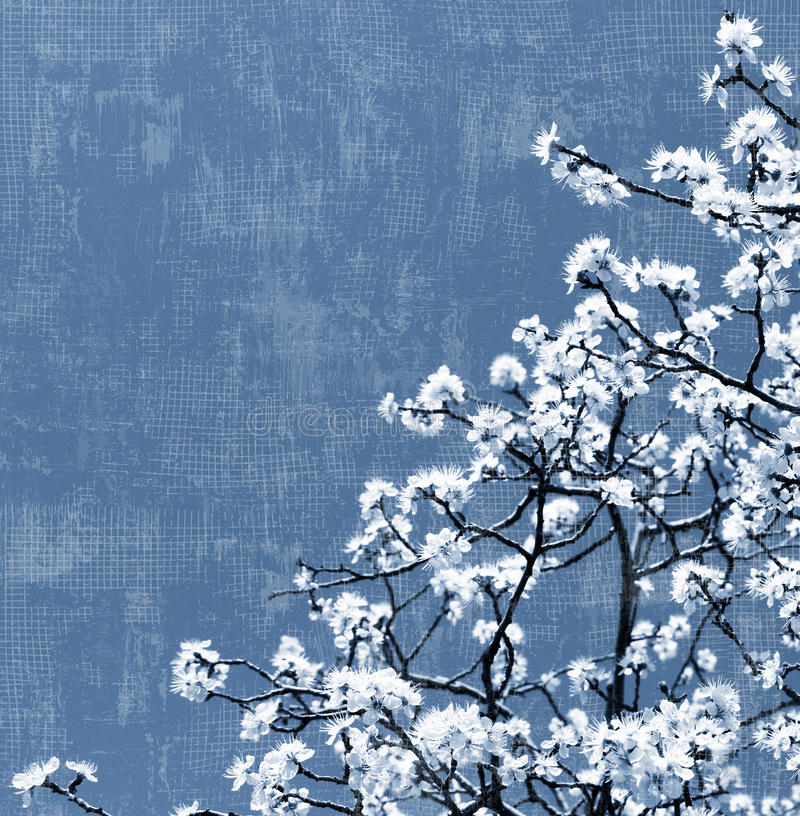 Download Blooming tree background stock image. Image of branch - 20024249