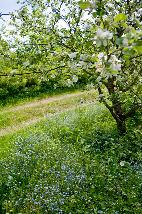 Blooming tree and flowers stock photography
