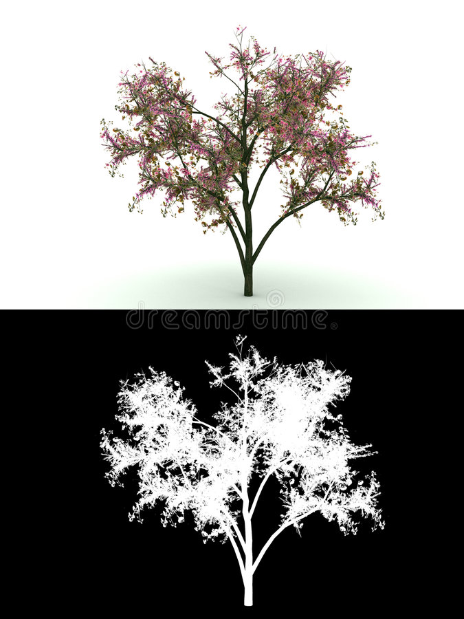 Blooming tree with pink flower isolated on white