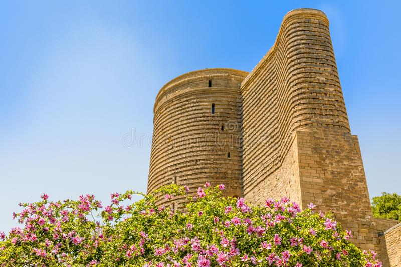 Blooming tree with pink flowers and Gız Galası medieval Maiden tower, old town, Baku, Azerbaijan royalty free stock photos