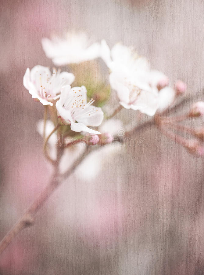 Blooming tree vintage background stock photos