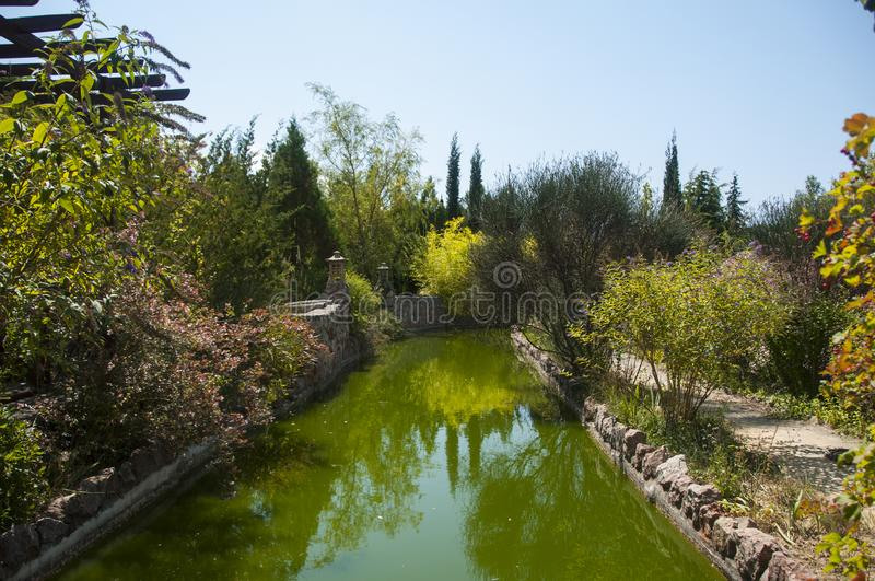 Blooming trees reflecting in a green pond. Overgrown garden. royalty free stock photos