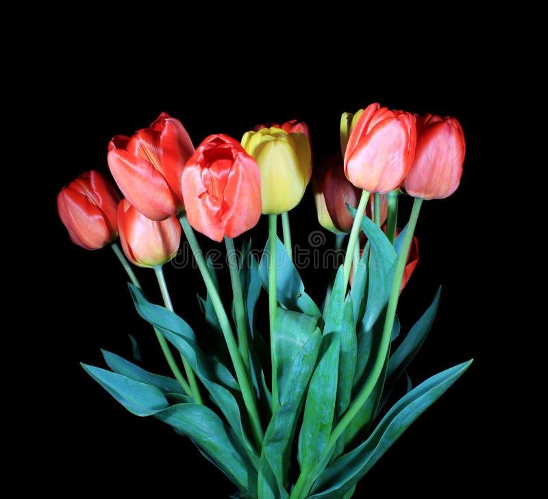 Download Blooming tulips stock photo. Image of macro, green, black - 24648756