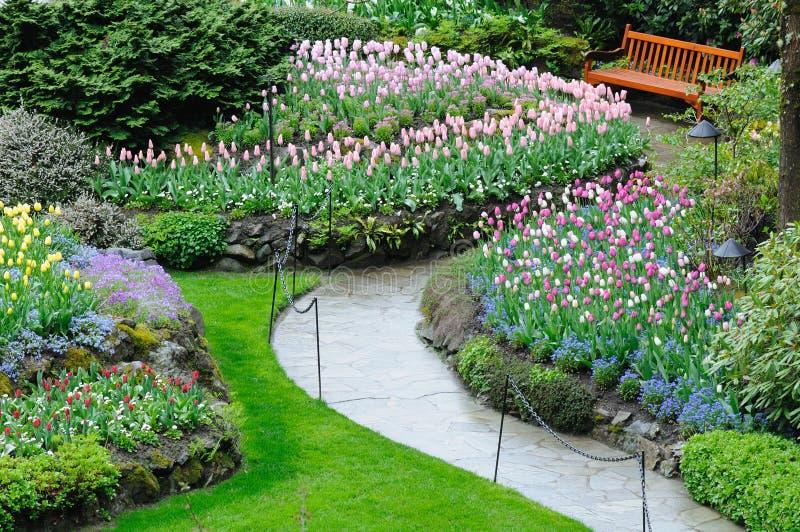 Blooming tulips in butchart garden stock image