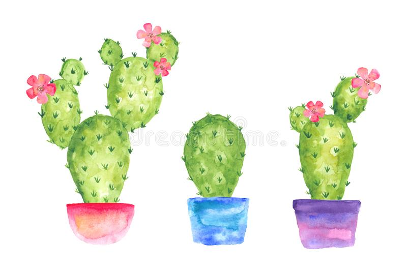 Blooming watercolor three cactus set in pots with flowers, watercolor drawing royalty free illustration