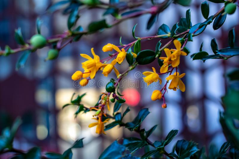Blooming wild exotic bush with shallow depth of field background.  royalty free stock photo
