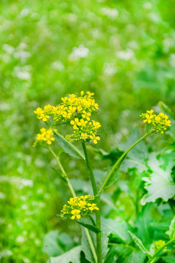 Blooming wild flowers on a green grass royalty free stock images