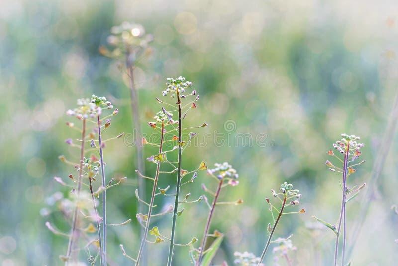 Blooming wild flowers stock photo