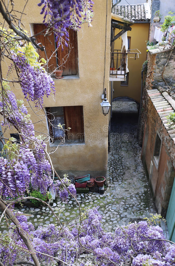 Blooming wisteria on the street of French village stock photography