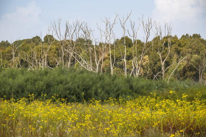 Blooming yellow flowers, green bushes, dried and green trees.  stock images