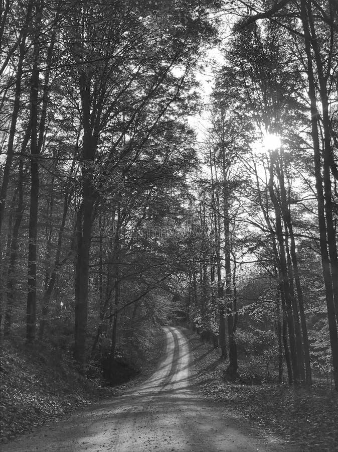 Bloomington Indiana skog Monroe County arkivfoto
