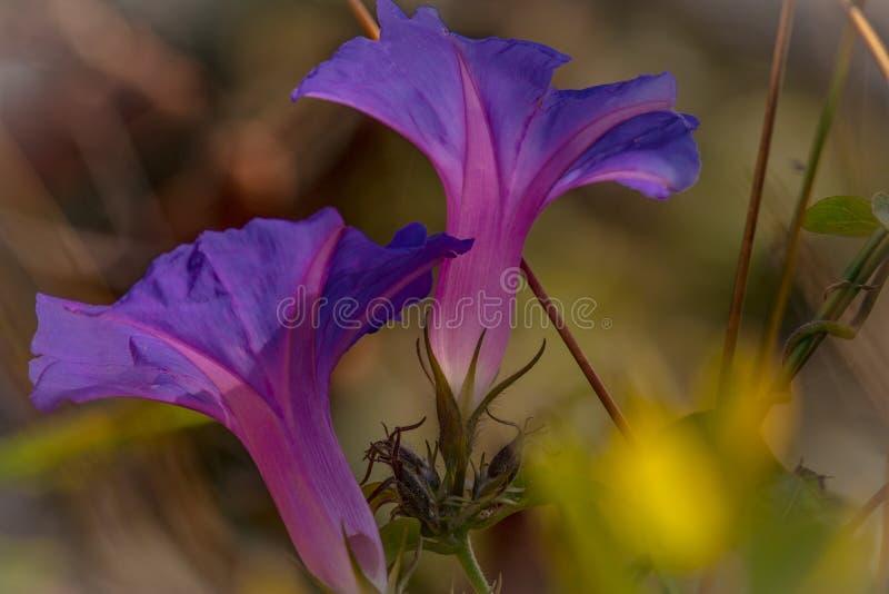 Blooms1 stock afbeeldingen
