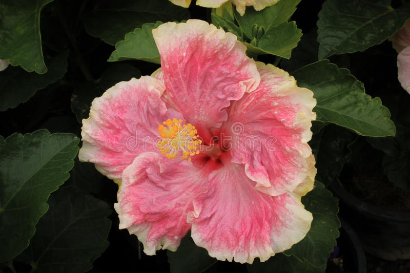 Bloomy цветок стоковое фото rf