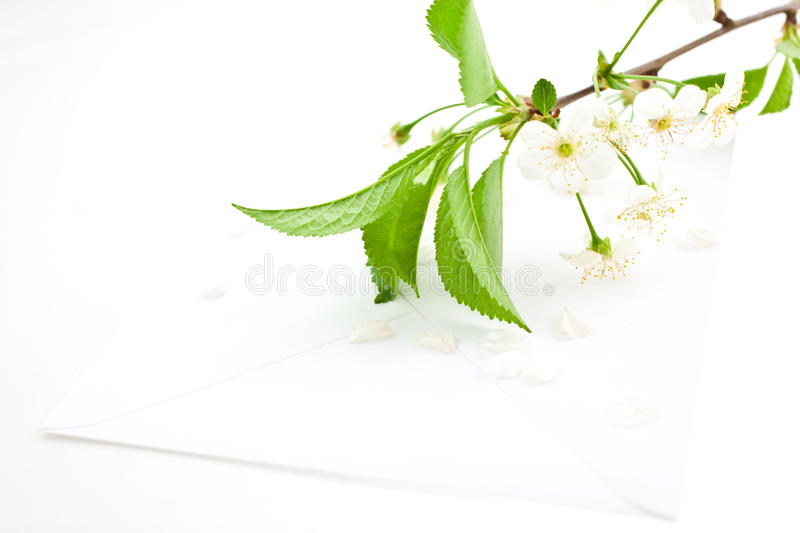 Bloomy cherry branch on a blank envelope. White bloomy cherry branch on a blank paper envelope stock image