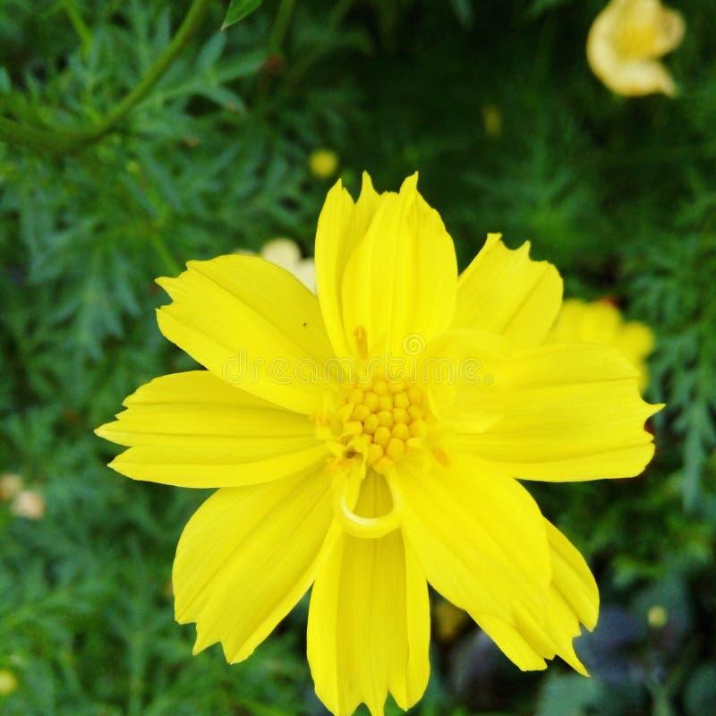 Bloomy flower. Shine bright like a flower stock photos