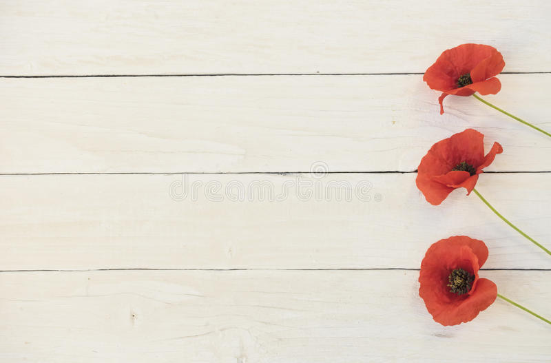 Bloomy wishes - red poppy. Three red poppy flowers on a white wood background stock photos