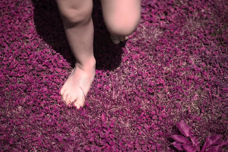 Blootvoets peuterkind die op roze en purper bloemgebied lopen - Surreal Achtergrond van het Droomconcept royalty-vrije stock afbeeldingen
