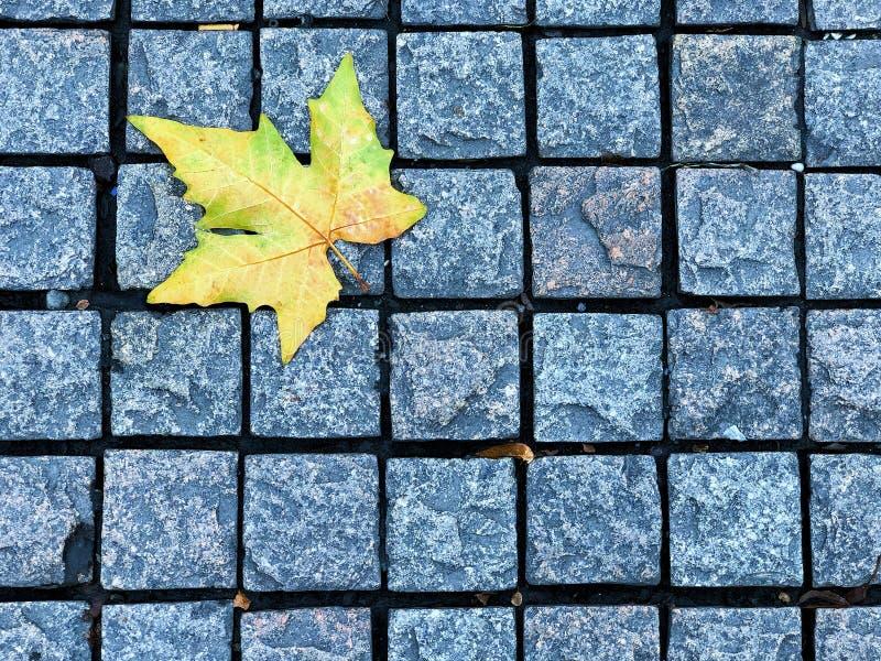 Bloque cuadrado de ladrillo de Footpath con hojas de arce amarillas, el hermoso camino del medio ambiente natural en la temporada  imagen de archivo libre de regalías