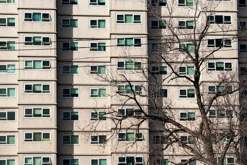 Bloque de apartamentos del consejo con un árbol deshojado en frente fotos de archivo libres de regalías
