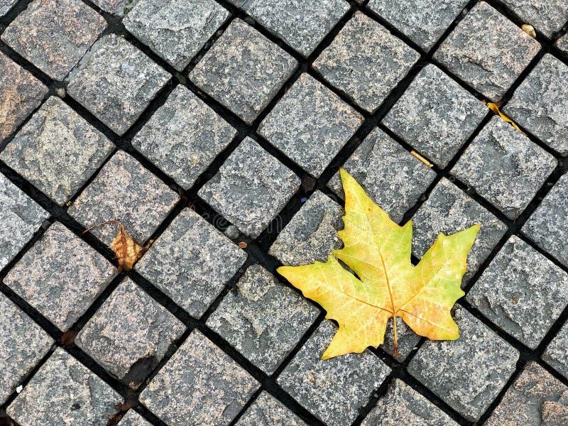 Bloque de ladrillo de diamante de Footpath con arce amarillo, la hermosa ruta del medio ambiente natural en la temporada de otoño imagenes de archivo
