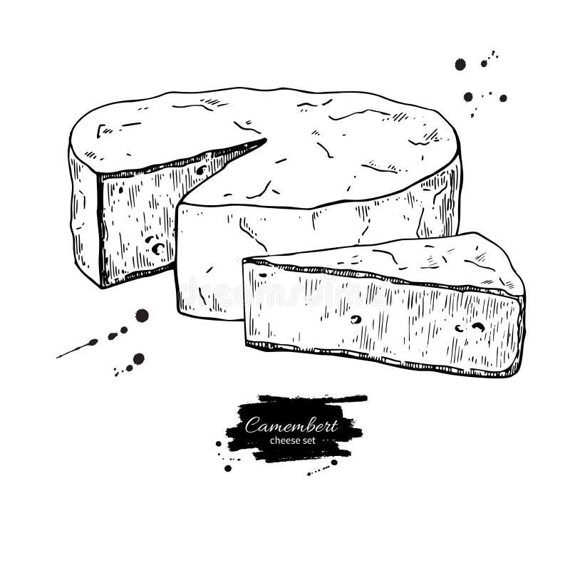 Bloque del queso del camembert y dibujo del triángulo Bosquejo dibujado mano de la comida del vector ilustración del vector