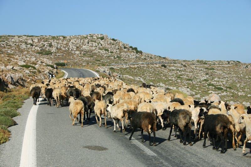 Bloqueo de Crete/de las ovejas fotografía de archivo libre de regalías