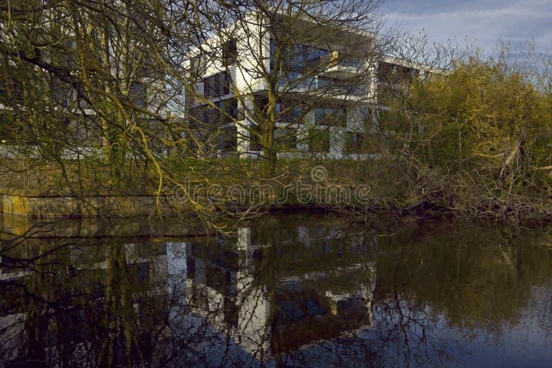 Bloques huecos y árboles blancos distantes del invierno de los arty de la amapola foto de archivo libre de regalías