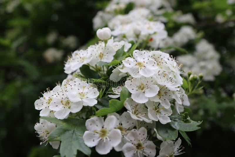 Blosseming 库存照片