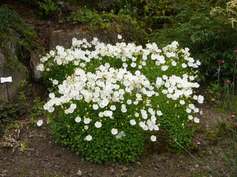 Blossmings witte bloemen in botanische tuin royalty-vrije stock afbeeldingen