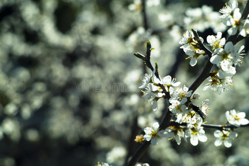 Download Blossom stock photo. Image of blur, trees, wood, flower - 22596410