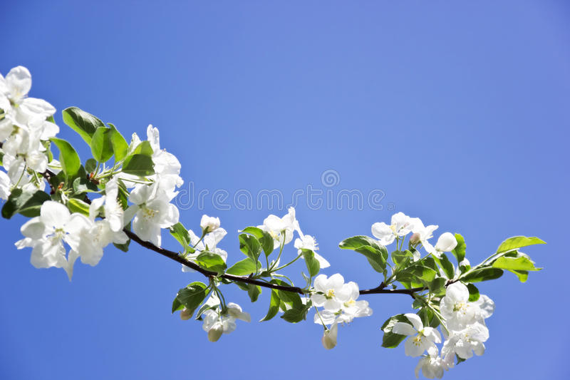 Download Blossom stock image. Image of background, blossom, april - 25132443