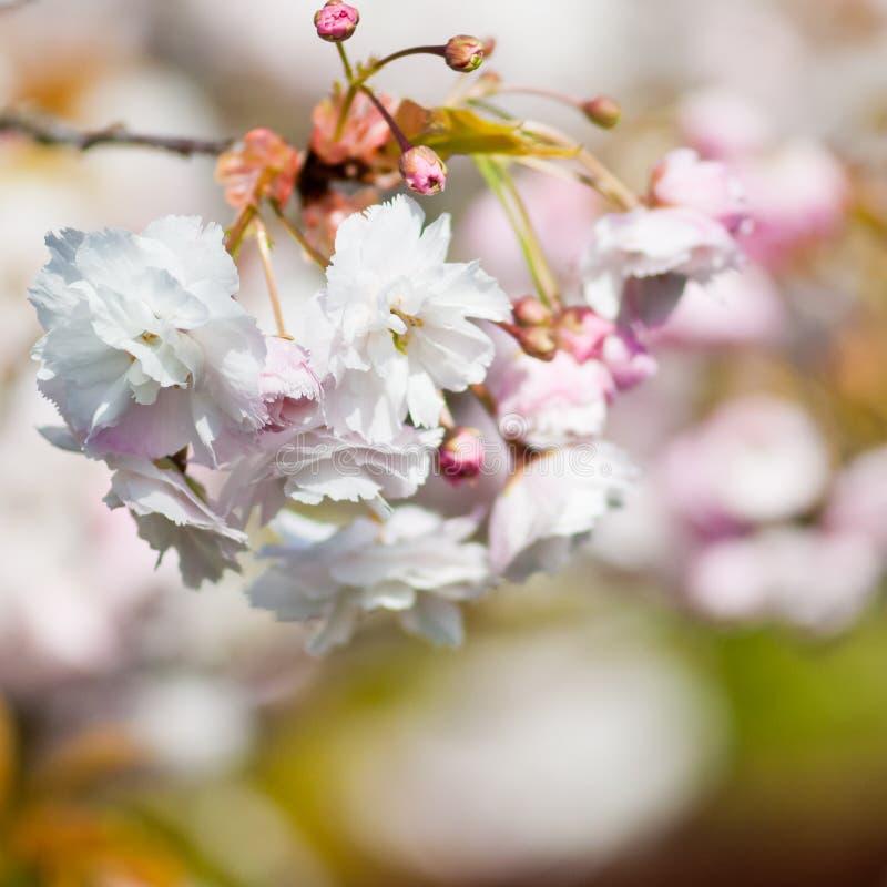 Download Blossom stock photo. Image of petal, spring, bokeh, close - 28033820
