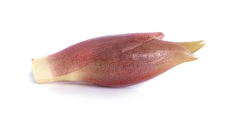 Blossom banana isolated on white background stock photo