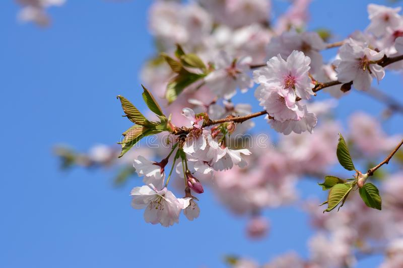 Blossom, Branch, Flower, Spring Free Public Domain Cc0 Image
