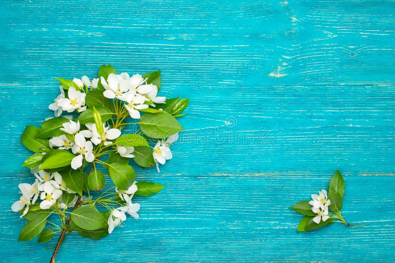 Blossom branch on turquoise background stock images